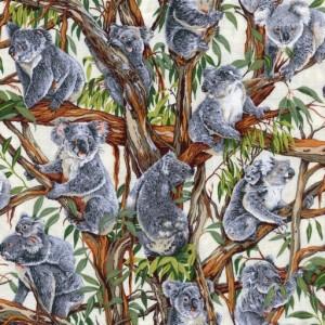Koalas - Cream