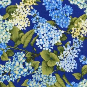 Lilac - Blue