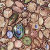 Beach Shells - Brown