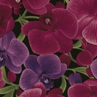 Large Orchids C3205-Magenta