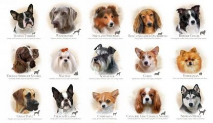 Dog Breeds Panel 1313-cream