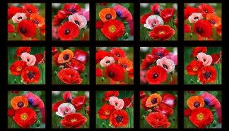 Poppies Panel 547-black
