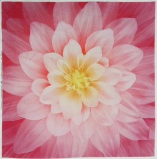 Dream Big Panel P4389-94-Wild-Rose