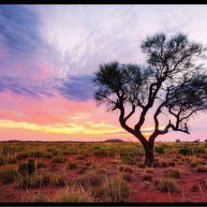 Australian Photography Panel DV532
